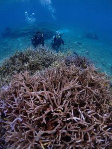サンゴの森へ