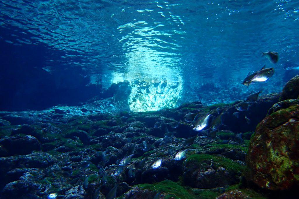 平和な水中世界